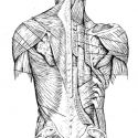 """Image for """"Tendon Strength"""", Fascia, the Sinew Channels & Internal Martial  Arts Part 1"""
